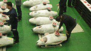 豊洲市場のセリ場で厳選したマグロをお届けします