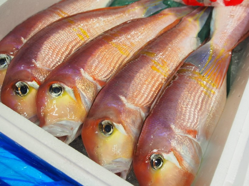 『津本式究極の血抜き』および熟成魚の販売について